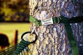 Lawson hammock Blue Ridge camping review