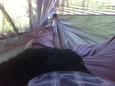 View from inside the hammock (with my dog sleeping on my lap)